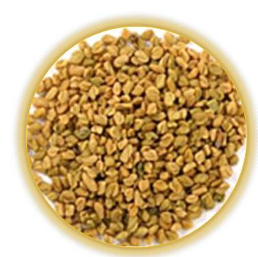 Fenugreek seed - Methidana